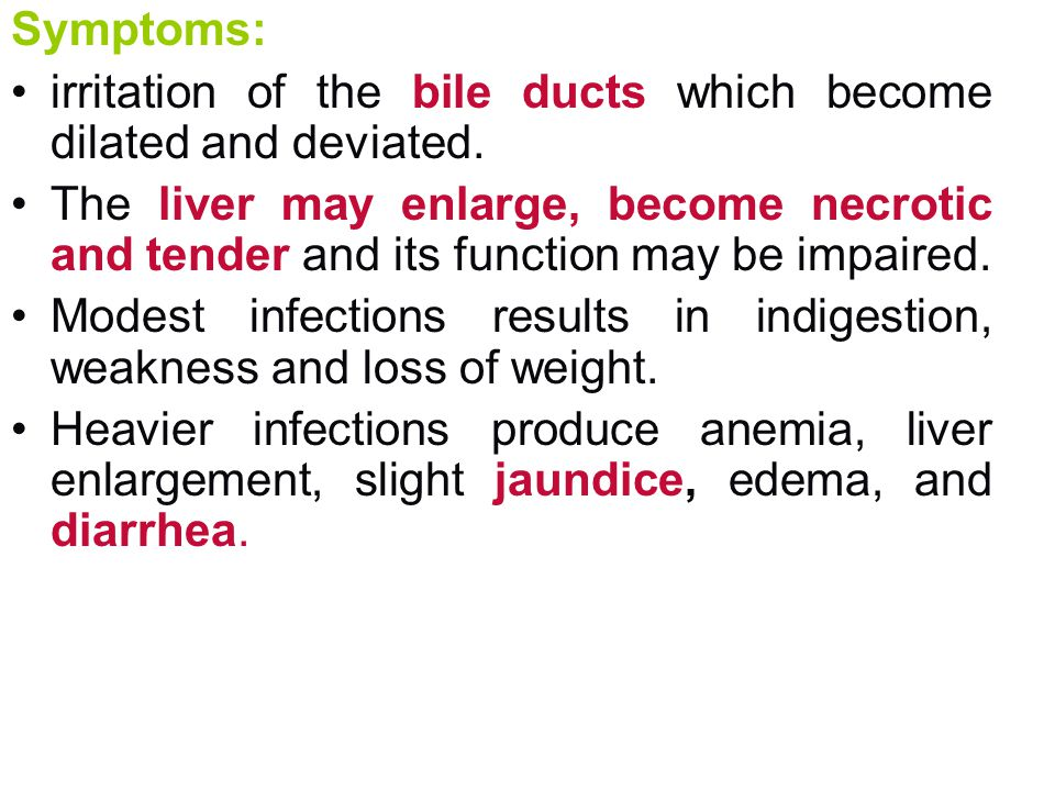 Symptoms: irritation of the bile ducts which become dilated and deviated.