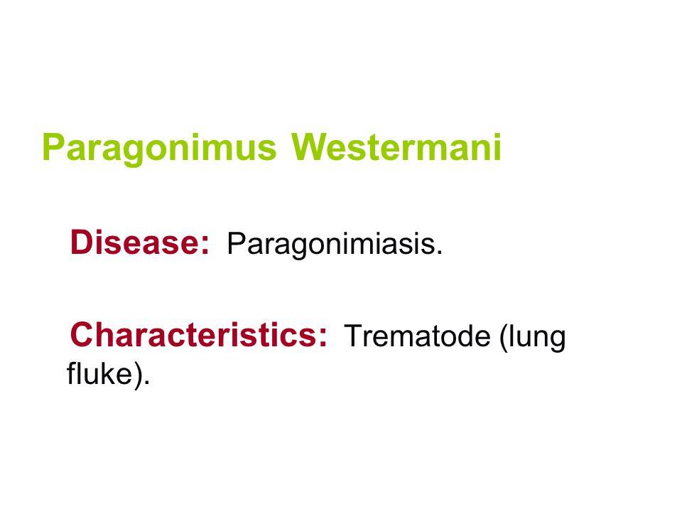 Paragonimus Westermani Disease: Paragonimiasis. Characteristics: Trematode (lung fluke).