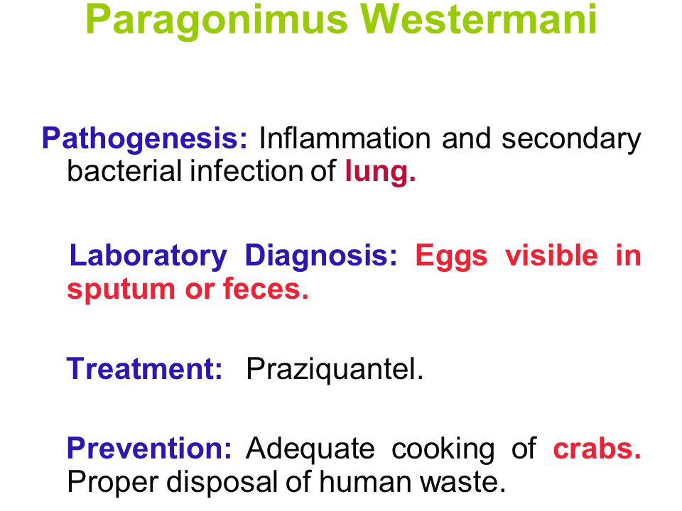 Paragonimus Westermani Pathogenesis: Inflammation and secondary bacterial infection of lung.