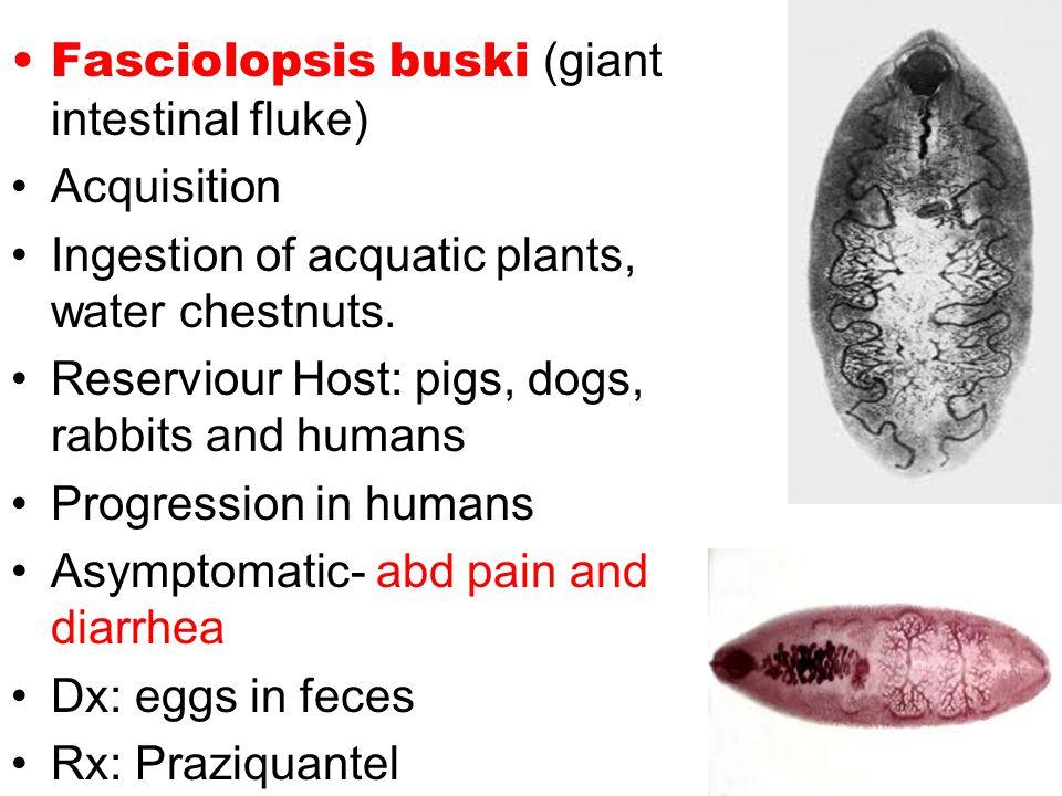 Fasciolopsis buski (giant intestinal fluke) Acquisition Ingestion of acquatic plants, water chestnuts.