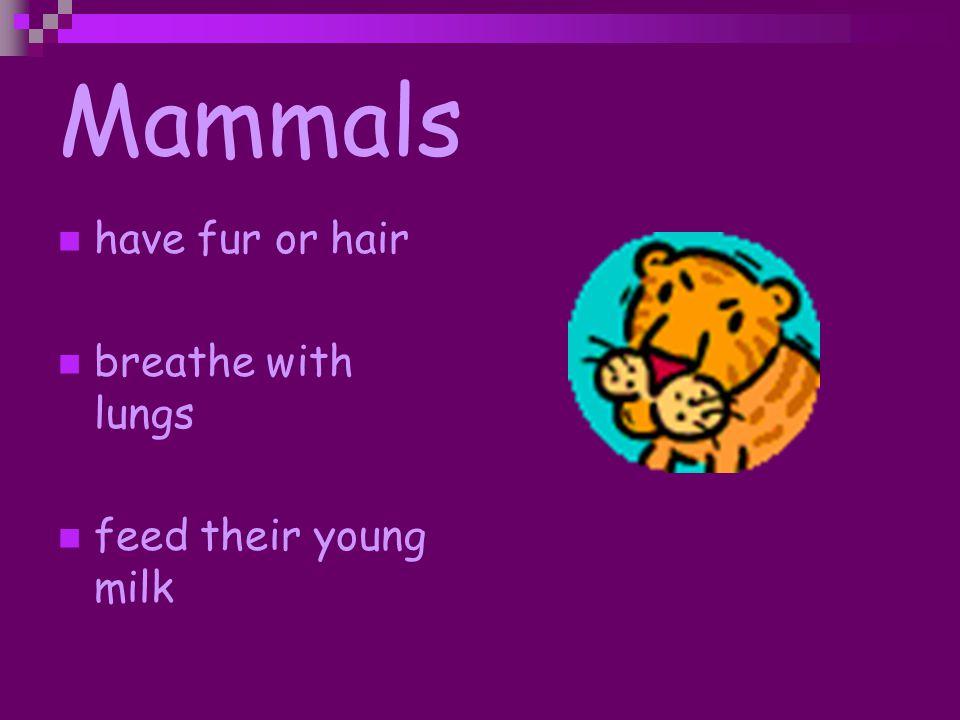 Types of Animals Miss Pflaumer Third Grade May 2007