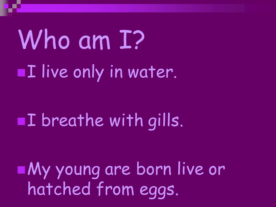 Who am I? I have fur or hair. I feed my young milk. I breathe with lungs.