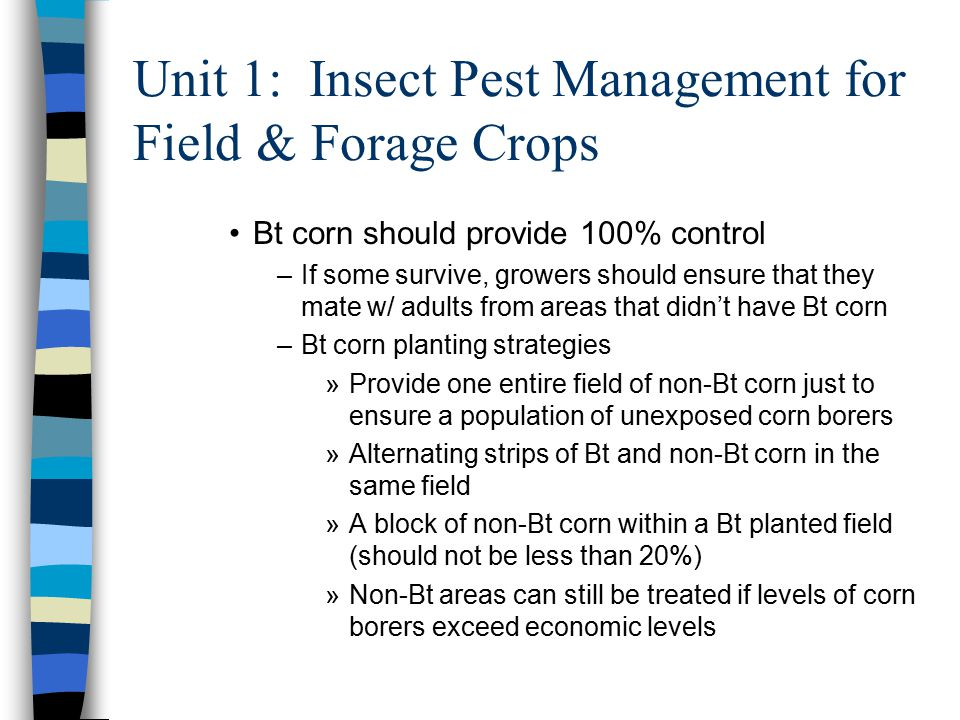 Unit 1: Insect Pest Management for Field & Forage Crops Bt corn should provide 100% control –If some survive, growers should ensure that they mate w/ adults from areas that didn't have Bt corn –Bt corn planting strategies »Provide one entire field of non-Bt corn just to ensure a population of unexposed corn borers »Alternating strips of Bt and non-Bt corn in the same field »A block of non-Bt corn within a Bt planted field (should not be less than 20%) »Non-Bt areas can still be treated if levels of corn borers exceed economic levels