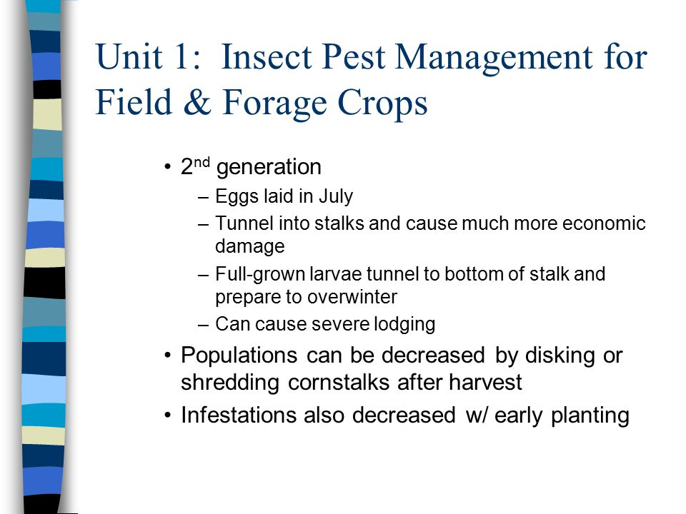 Unit 1: Insect Pest Management for Field & Forage Crops 2 nd generation –Eggs laid in July –Tunnel into stalks and cause much more economic damage –Full-grown larvae tunnel to bottom of stalk and prepare to overwinter –Can cause severe lodging Populations can be decreased by disking or shredding cornstalks after harvest Infestations also decreased w/ early planting