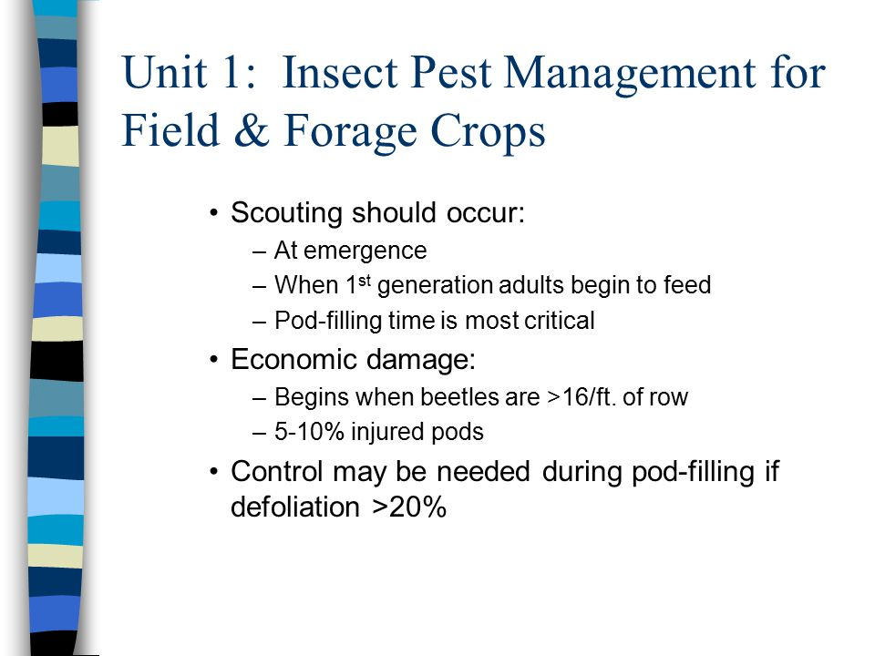 Unit 1: Insect Pest Management for Field & Forage Crops Scouting should occur: –At emergence –When 1 st generation adults begin to feed –Pod-filling time is most critical Economic damage: –Begins when beetles are >16/ft.