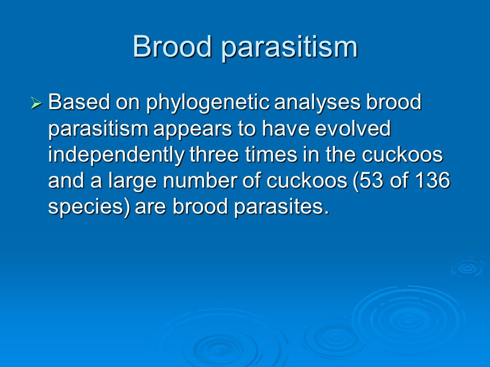 Brood parasitism  Based on phylogenetic analyses brood parasitism appears to have evolved independently three times in the cuckoos and a large number of cuckoos (53 of 136 species) are brood parasites.