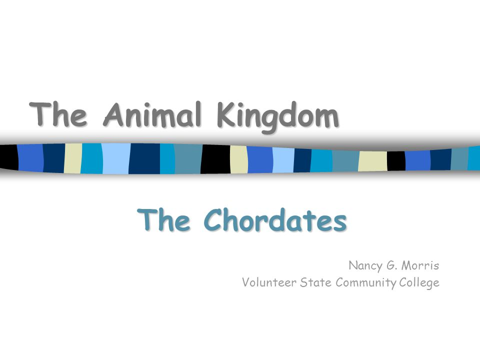 The Animal Kingdom The Chordates Nancy G. Morris Volunteer State Community College
