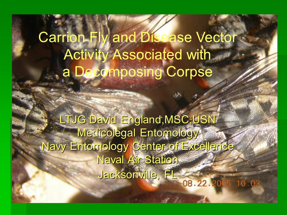 Carrion Fly and Disease Vector Activity Associated with a Decomposing Corpse LTJG David England,MSC,USN Medicolegal Entomology Navy Entomology Center