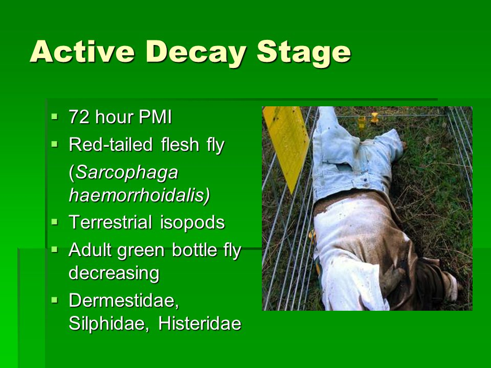 Active Decay Stage  72 hour PMI  Red-tailed flesh fly (Sarcophaga haemorrhoidalis)  Terrestrial isopods  Adult green bottle fly decreasing  Dermestidae, Silphidae, Histeridae