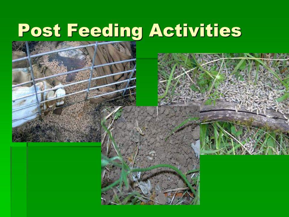 Post Feeding Activities