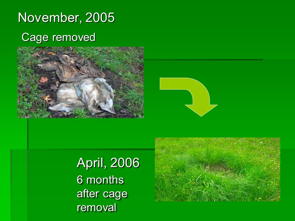 November, 2005 Cage removed Cage removed April, 2006 6 months after cage removal