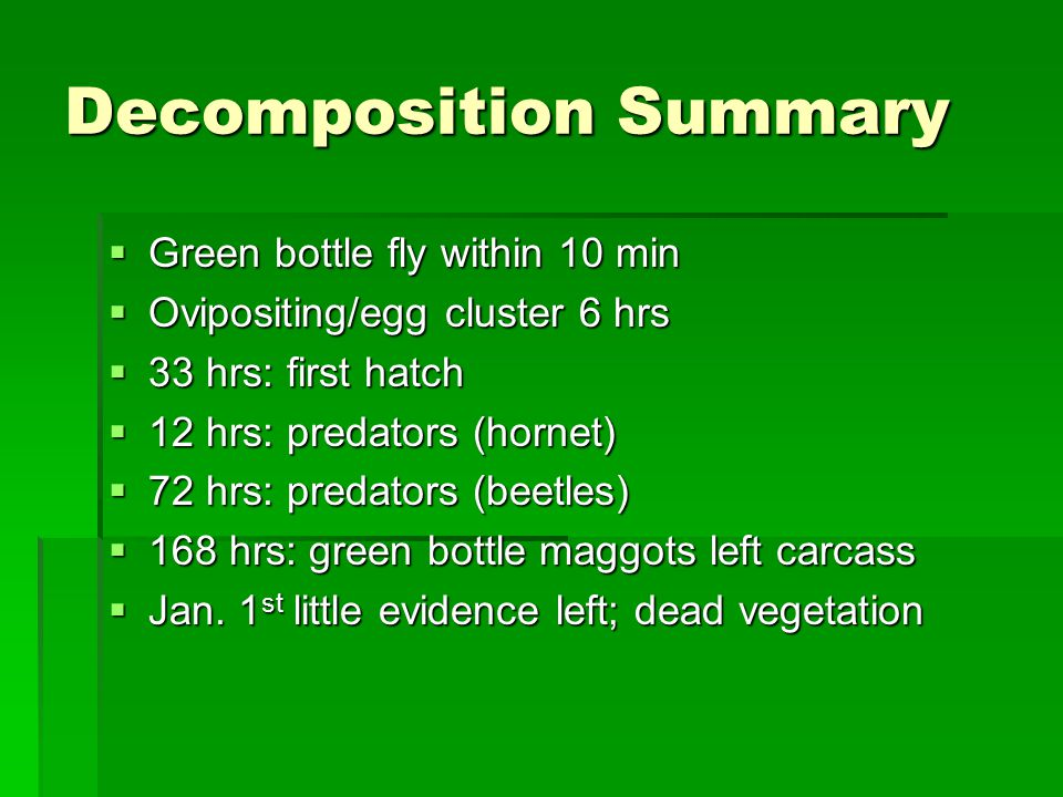 Decomposition Summary  Green bottle fly within 10 min  Ovipositing/egg cluster 6 hrs  33 hrs: first hatch  12 hrs: predators (hornet)  72 hrs: predators (beetles)  168 hrs: green bottle maggots left carcass  Jan.