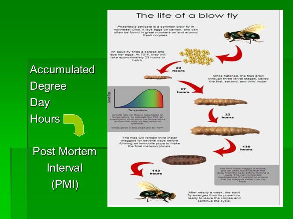 AccumulatedDegreeDayHours Post Mortem Interval(PMI)