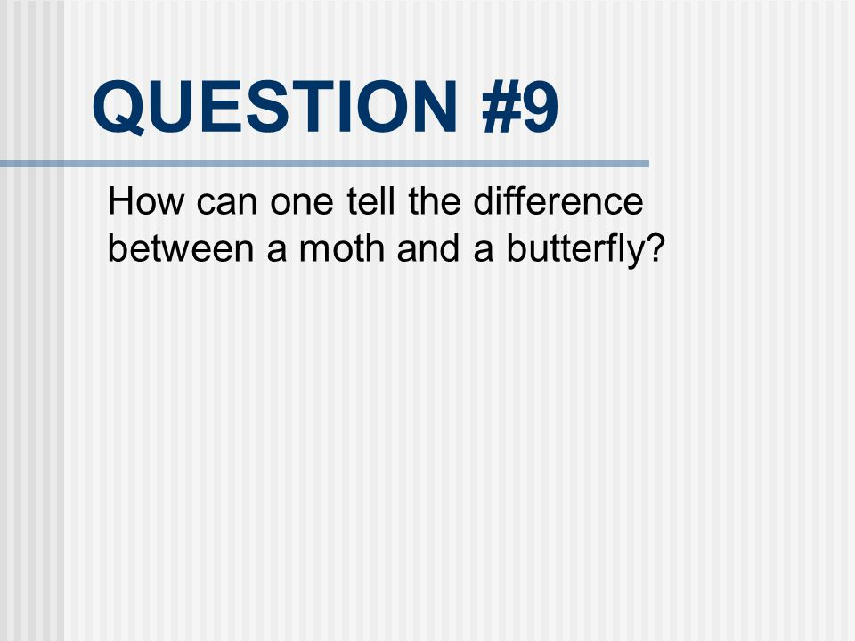 QUESTION #9 How can one tell the difference between a moth and a butterfly?