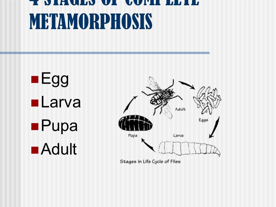 4 STAGES OF COMPLETE METAMORPHOSIS Egg Larva Pupa Adult