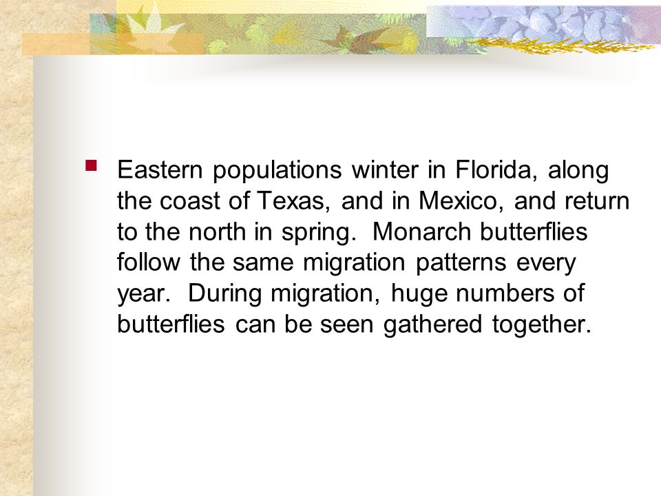 Eastern populations winter in Florida, along the coast of Texas, and in Mexico, and return to the north in spring.