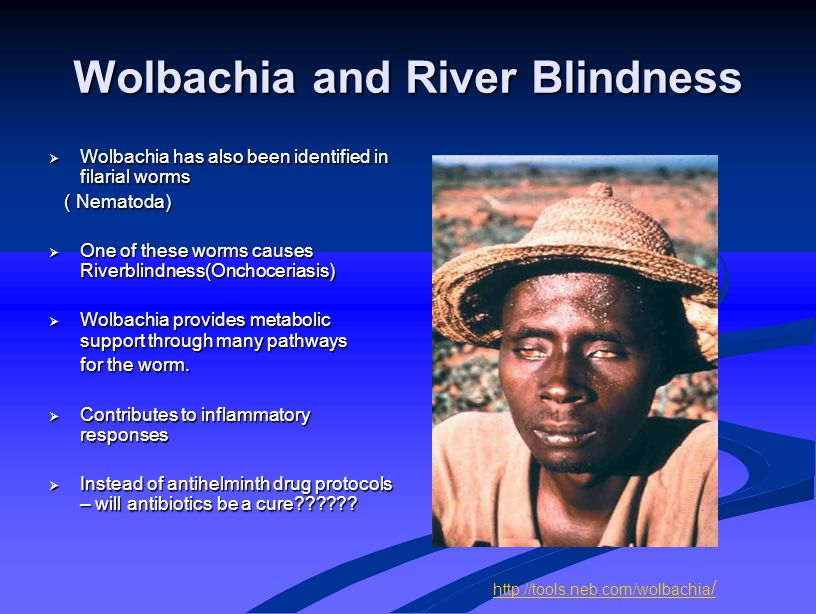 Wolbachia and River Blindness  Wolbachia has also been identified in filarial worms ( Nematoda) ( Nematoda)  One of these worms causes Riverblindnes