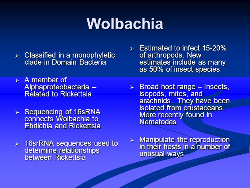 Genetics of Wolbachia  Wolbachian genome consists of one circular chromosome   1.26Mbp – 1195 proteins – GC content 35%  Contains genes with Ankyrin repeats – Ankyrins connect endosymbionts to the cell cytoskleton which is an adaptation for intracellular existence Ankyrin repeats – Ankyrins connect endosymbionts to the cell cytoskleton which is an adaptation for intracellular existence  Type Four Secretion System – required for persistence of endosymbiont in host – conserved in Rickettsia Female Drosophila melanogaster – laying egg P.