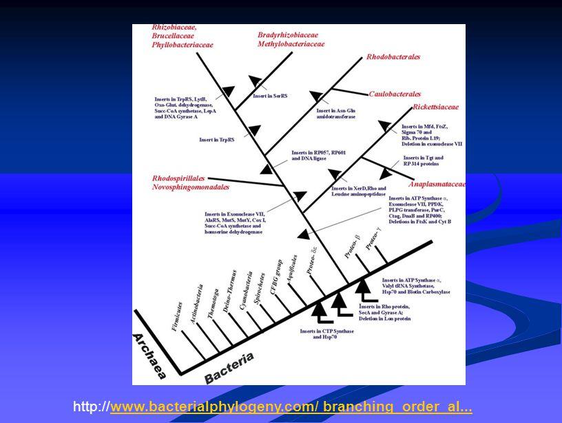 http://www.bacterialphylogeny.com/ branching_order_al...www.bacterialphylogeny.com/ branching_order_al...