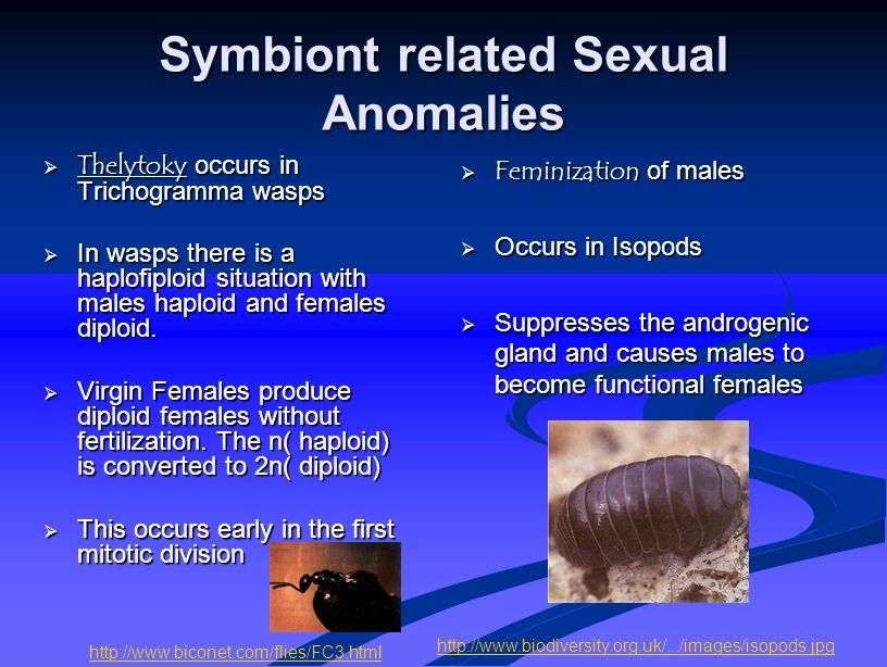 Symbiont related Sexual Anomalies  Thelytoky occurs in Trichogramma wasps  In wasps there is a haplofiploid situation with males haploid and females