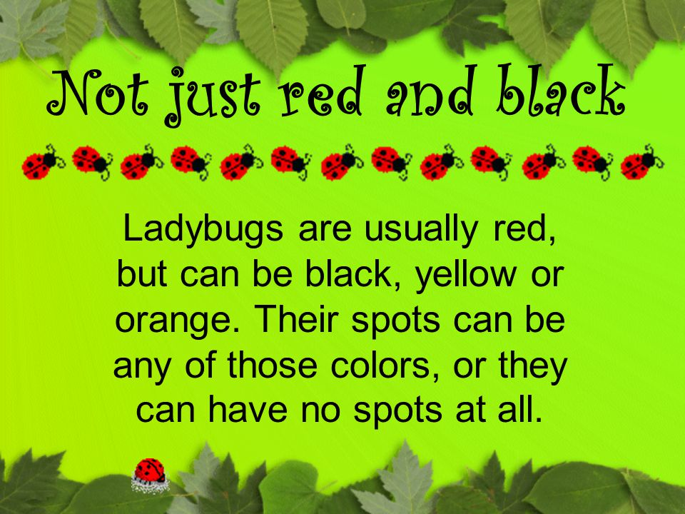 Ladybugs are usually red, but can be black, yellow or orange. Their spots can be any of those colors, or they can have no spots at all. Not just red a