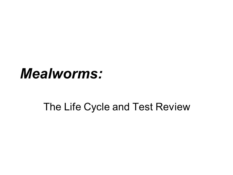 The Life Cycle and Test Review Mealworms: