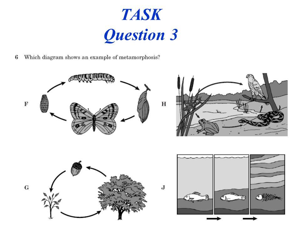 TASK Question 3 PLC 23
