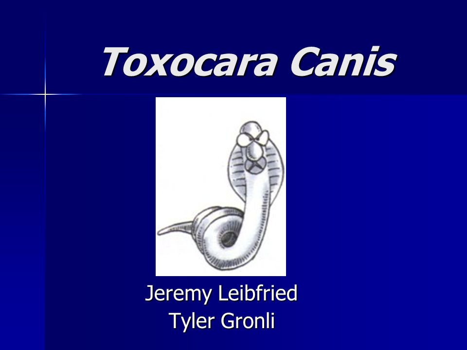 Toxocara Canis Toxocara Canis Jeremy Leibfried Tyler Gronli