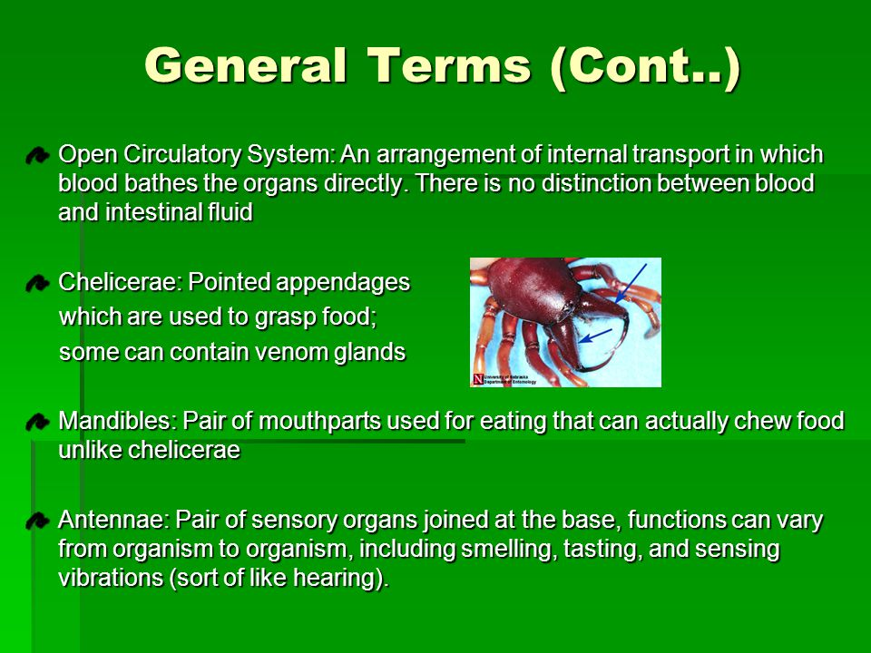 General Terms (Cont……….)  Compound Eyes: Eyes of an arthropod that consist of several ommatidia, tiny independent photoreception units  Malpighian tubules: Excretory organs that remove metabolic wastes from the Arthropods   Complete Metamorphosis: Arthropods with a larval stage that is made to eat and grow.