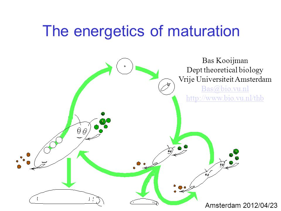 The energetics of maturation Bas Kooijman Dept theoretical biology Vrije Universiteit Amsterdam Bas@bio.vu.nl http://www.bio.vu.nl/thb Amsterdam 2012/04/23
