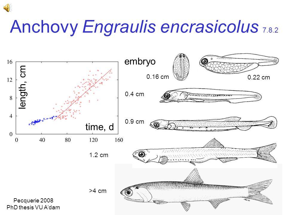Anchovy Engraulis encrasicolus 7.8.2 time, d length, cm 0.16 cm 0.22 cm 0.4 cm 0.9 cm 1.2 cm >4 cm embryo Pecquerie 2008 PhD thesis VU A'dam