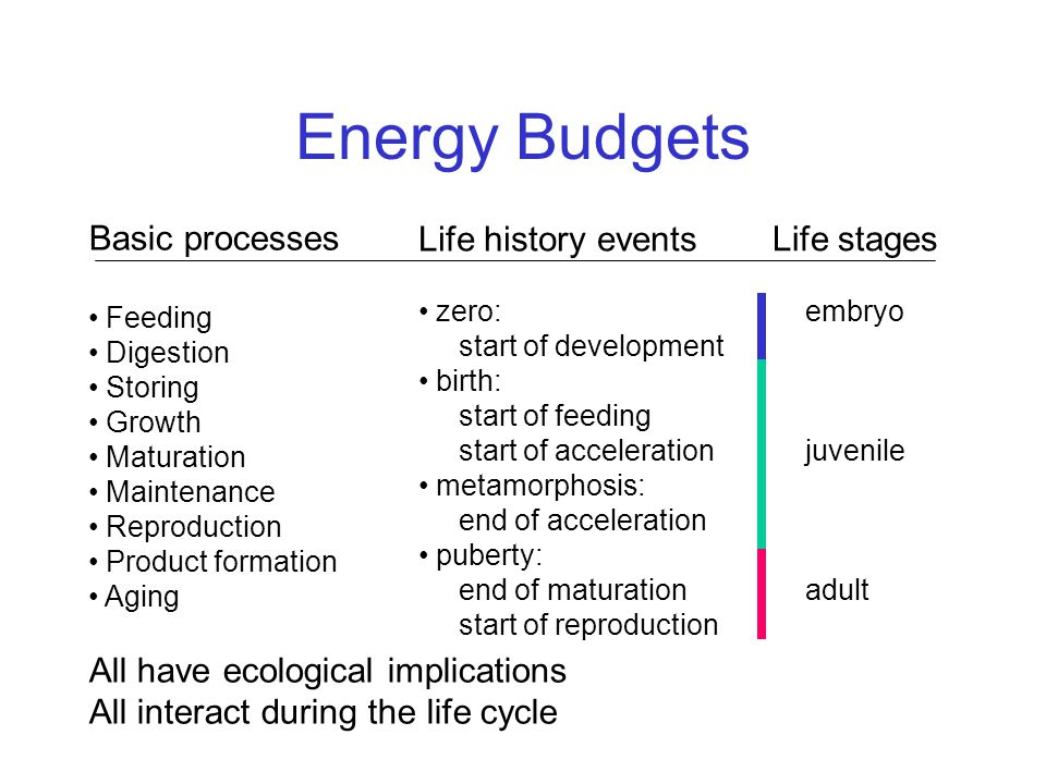 Energy Budgets Basic processes Feeding Digestion Storing Growth Maturation Maintenance Reproduction Product formation Aging All have ecological implications All interact during the life cycle Life history events zero: start of development birth: start of feeding start of acceleration metamorphosis: end of acceleration puberty: end of maturation start of reproduction Life stages embryo juvenile adult