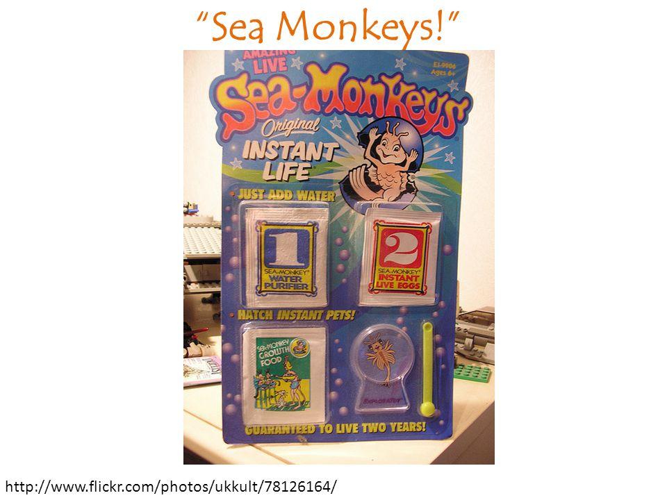 Sea Monkeys! http://www.flickr.com/photos/ukkult/78126164/