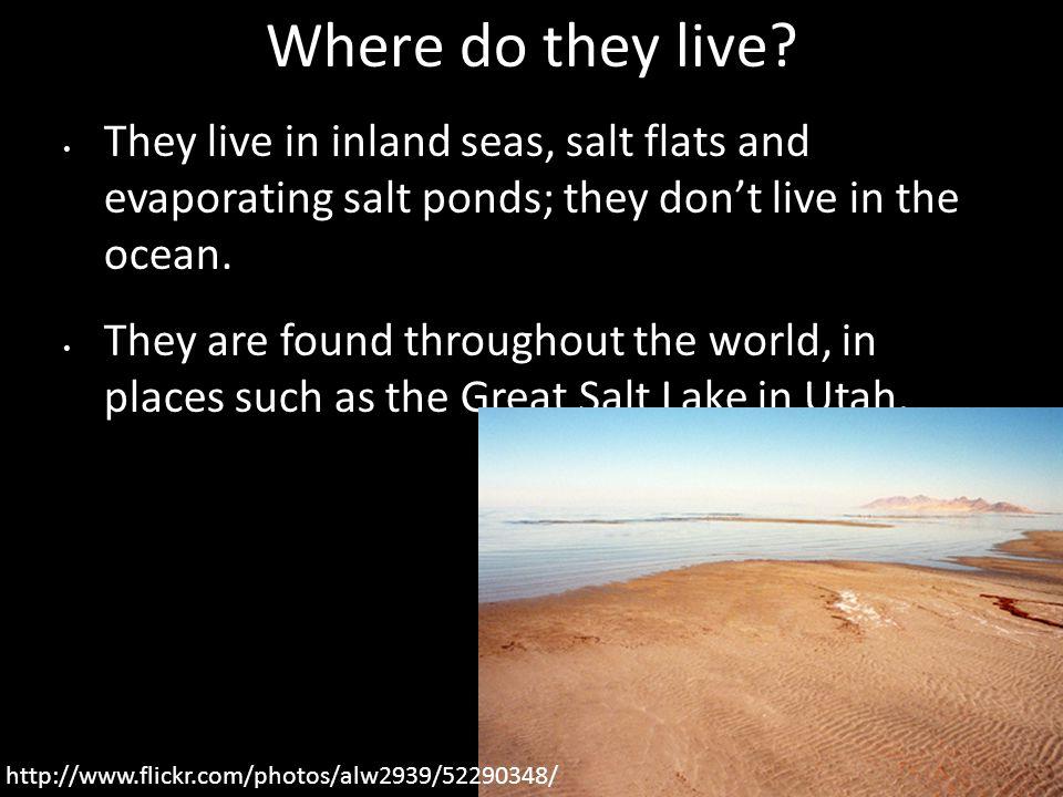 Where do they live.