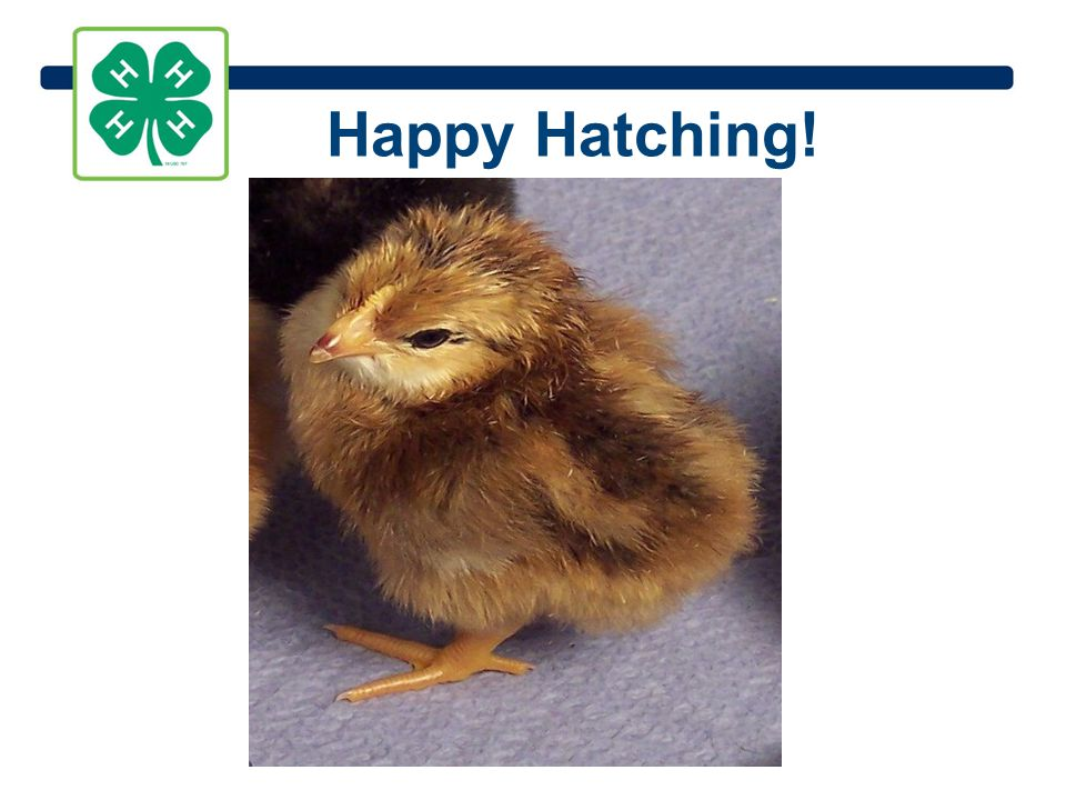 Happy Hatching!