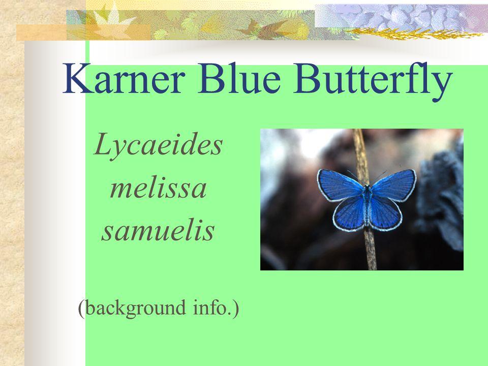 Karner Blue Butterfly Lycaeides melissa samuelis (background info.)