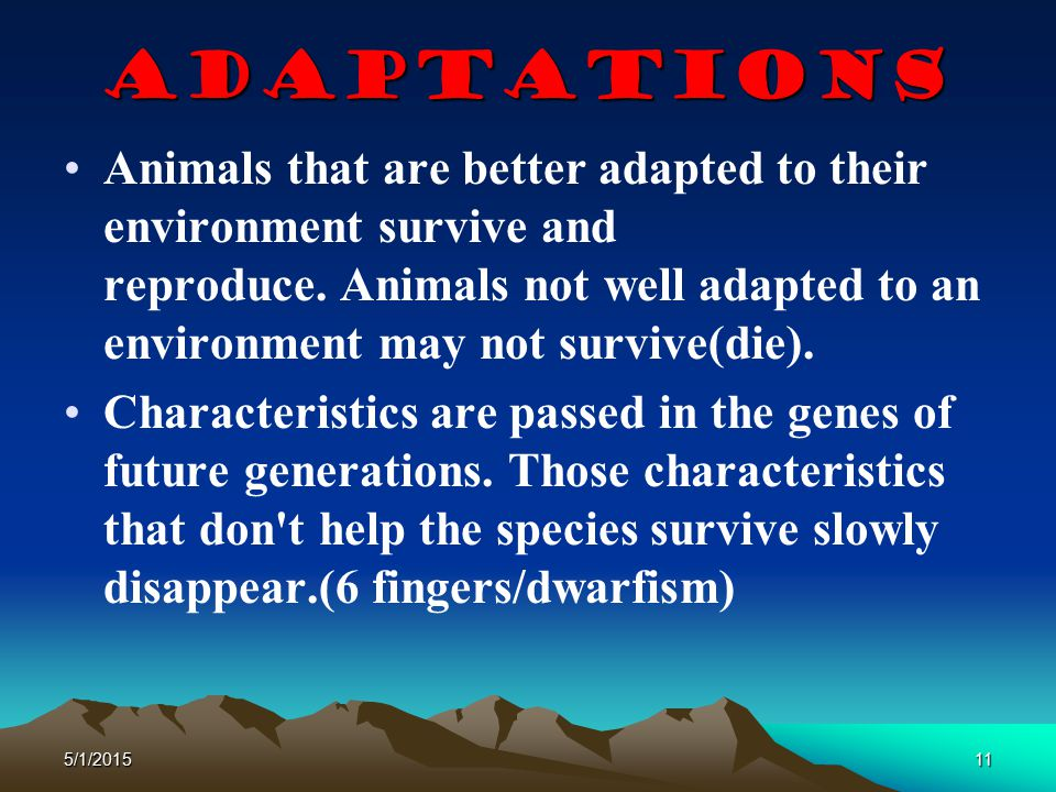 5/1/201511 Adaptations Animals that are better adapted to their environment survive and reproduce. Animals not well adapted to an environment may not