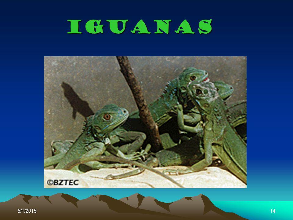 5/1/201514 Iguanas