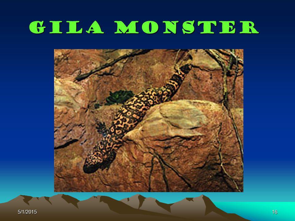 5/1/201516 Gila monster