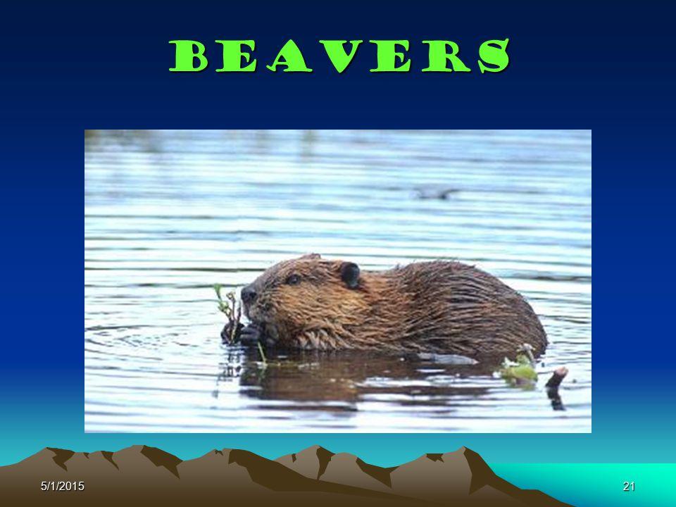 5/1/201521 Beavers