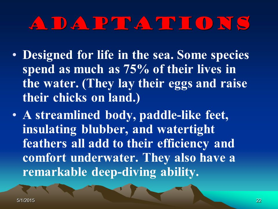 5/1/201522 Adaptations Designed for life in the sea. Some species spend as much as 75% of their lives in the water. (They lay their eggs and raise the