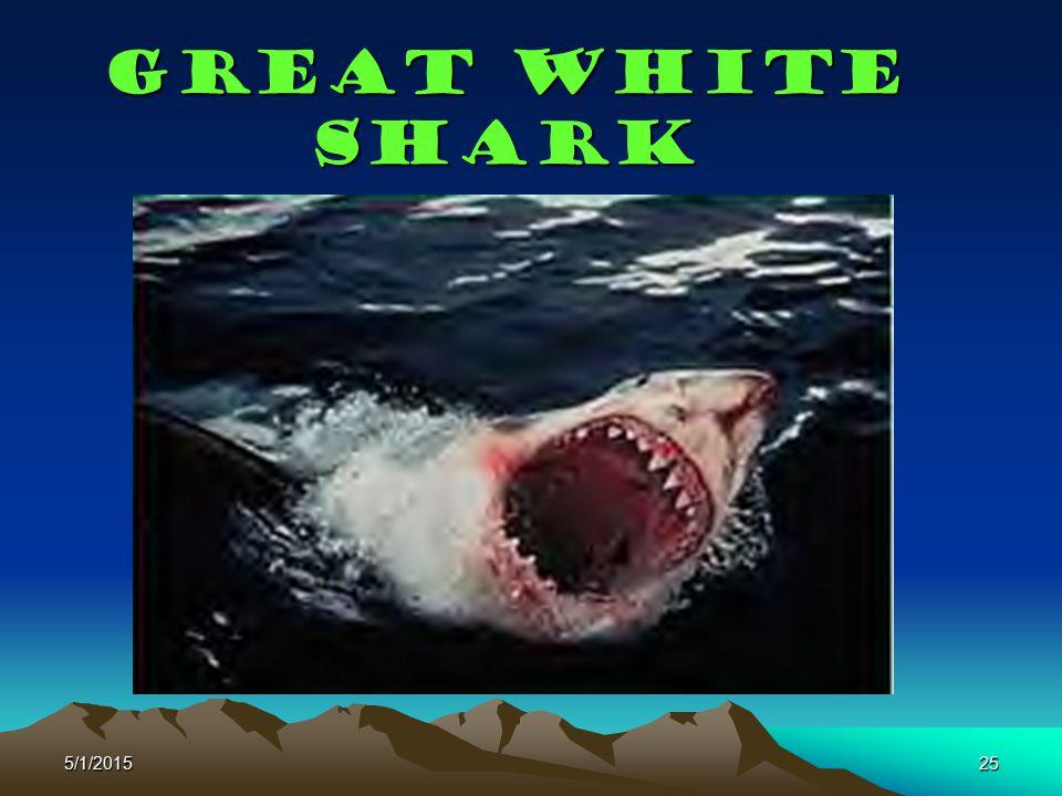 5/1/201525 Great White shark