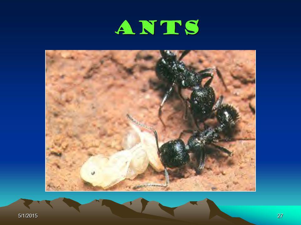 5/1/201527 Ants