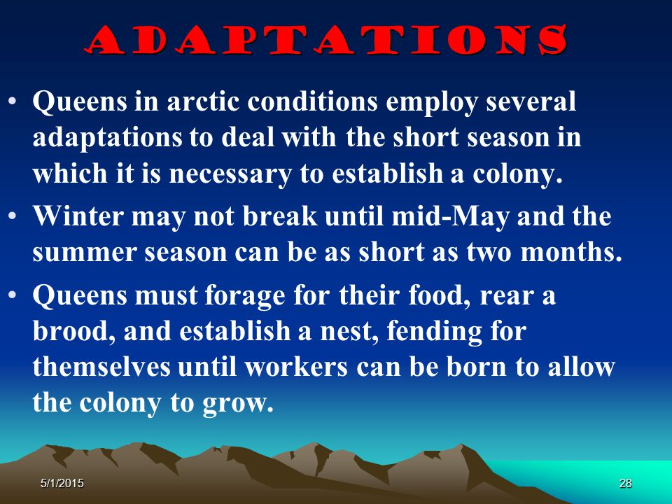 5/1/201528 Adaptations Queens in arctic conditions employ several adaptations to deal with the short season in which it is necessary to establish a co