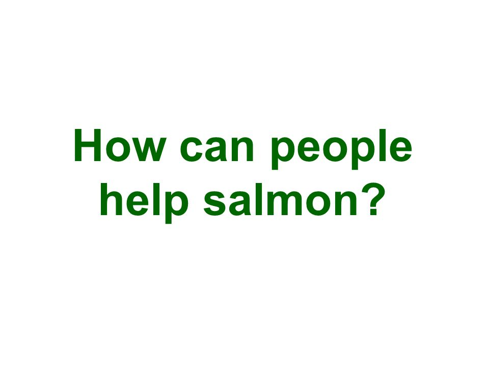 How can people help salmon