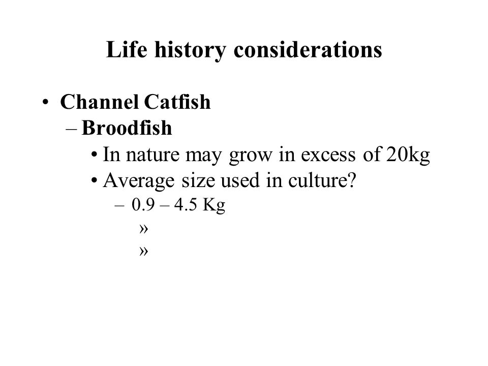 Life history considerations Channel Catfish –Broodfish In nature may grow in excess of 20kg Average size used in culture.