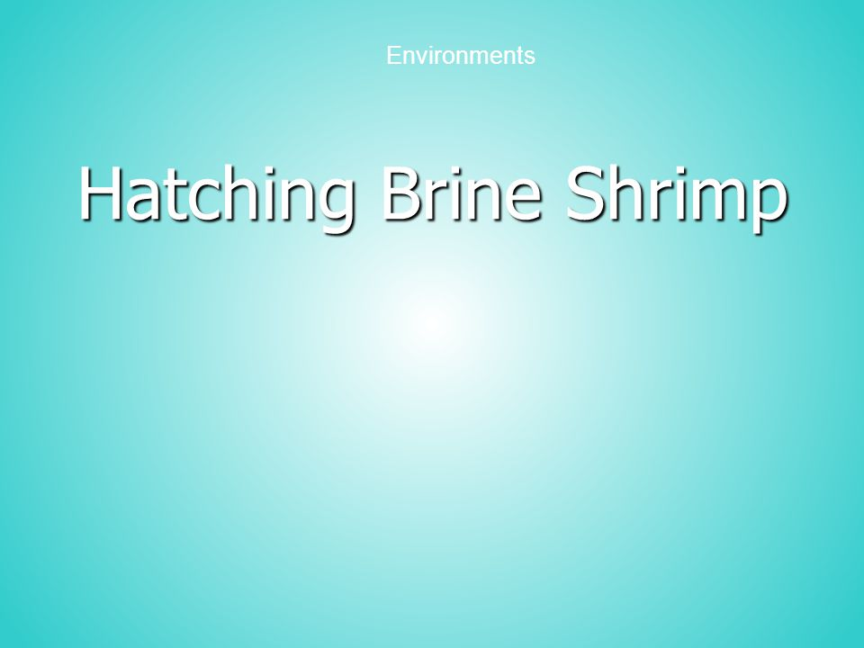 Purpose Observe and compare the hatching of brine shrimp eggs in four salt concentrations Organize data from an experiment Determine the range of salt tolerance for brine shrimp hatching Draw conclusions about the optimum salt conditions for brine shrimp hatching Design an investigation to test the viability of brine shrimp eggs.