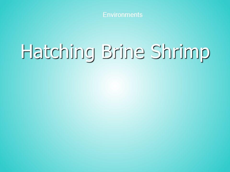Hatching Brine Shrimp Environments