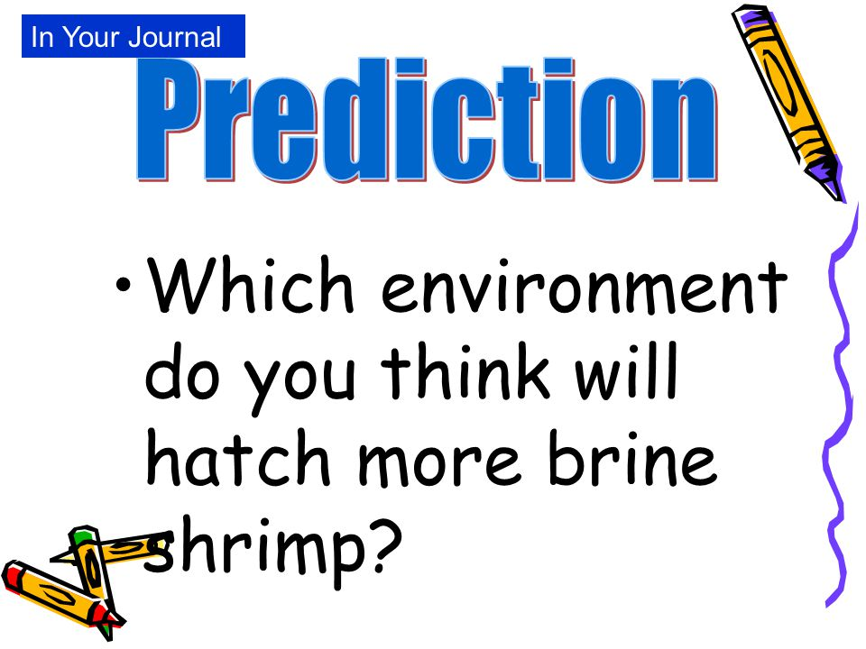 Which environment do you think will hatch more brine shrimp? In Your Journal