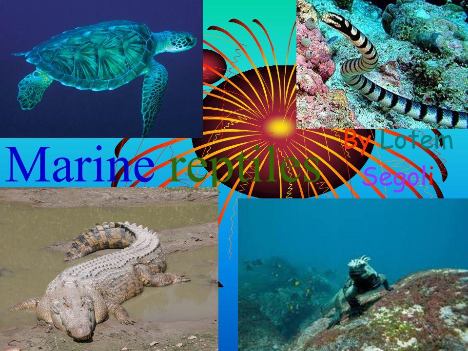 Marine reptiles By Lotem Segoli